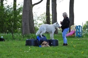 Knon Hondenschool Borger